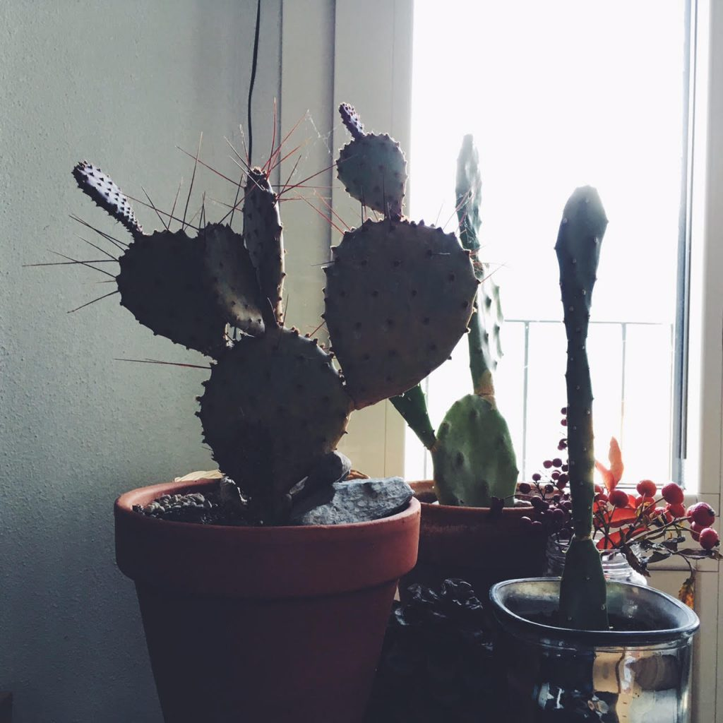 cactus in my studio